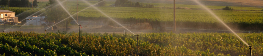 Panorama of impact sprinklers spraying water over crops