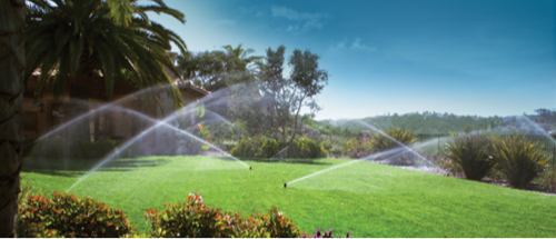 Green turf surrounded by palm trees with single stream rotors irrigating