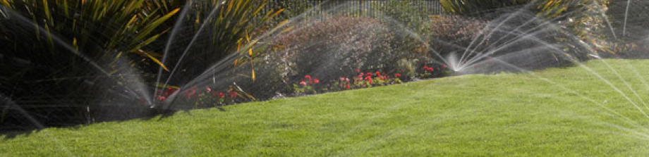 A large field being watered by sprinklers