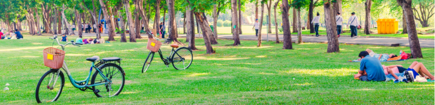 Panorama of people in park with bicycles, grass and large trees
