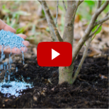 Blue fertilizer being applied with youtube play button