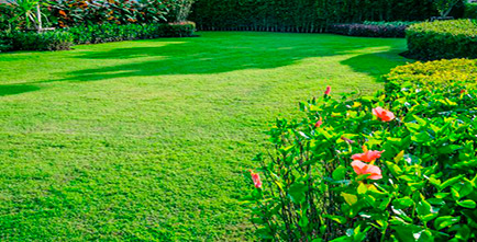 Yard with green grass and bushes