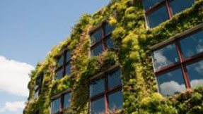 A building covered in plant growth