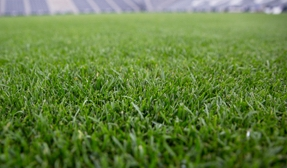 A close-up of a grass field